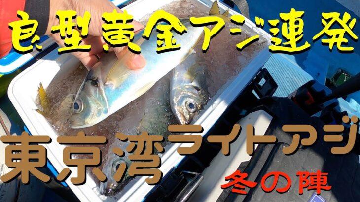 【釣】東京湾の小型遊漁船をチャーターして高級黄金アジを狙う!冬になり脂を蓄えた極太黄金アジを・・・ライトアジ