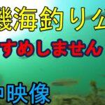 【水中映像】平磯海釣り公園で水中撮影してきた(海釣り公園 海釣り 兵庫)