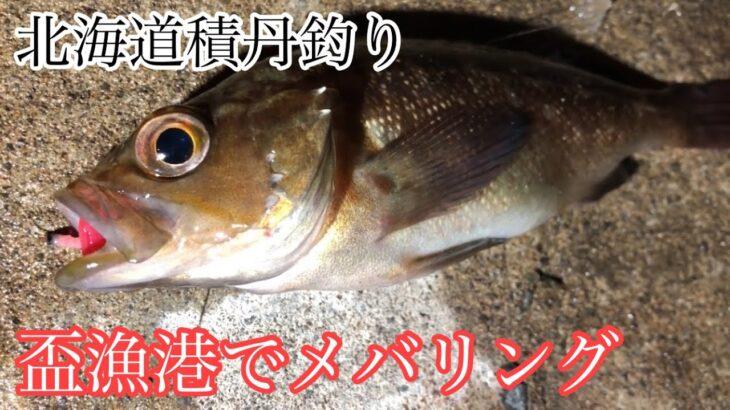 北海道積丹釣り 盃漁港でメバリング