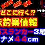 【2月19日配信】東京湾、房総、常磐、海釣り公園の釣果情報。ランカーシーバス3尾。荒川好調。アイナメ44cm。