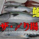 【海釣り情報  船釣り情報】鰤が釣れたら!〆り場第50弾