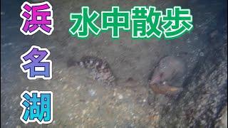 [水中ドローン]浜名湖海釣り公園5番T字堤でまさかの魚が⁉︎
