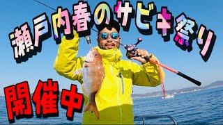 #79【鯛サビキ】速報2.22冬でも黒い幼なじみと瀬戸内鯛サビキいったらチャリチャリしてました【速報】