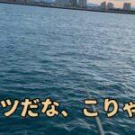 浜名湖海釣り公園 ダツ