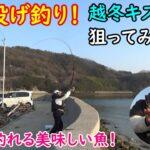 【新規開拓】冬の投げ釣り!越冬キスを狙ってみました!