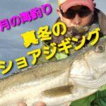 【2月の海釣り】 真冬のショアジギング