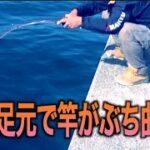 瀬戸内海釣り ブチ曲がる竿でバケモノとバトル 記録も更新!!