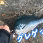 寒グレを狙え!!高知県柏島で磯釣り!良型グレゲット!(後編)