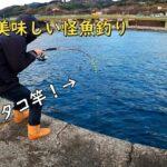 【米神堤防】神奈川県で真冬の絶品怪魚釣り!【海釣り】