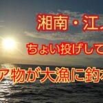 【江ノ島・片瀬漁港・海釣り】レア物がたくさん釣れた!春の兆しか…