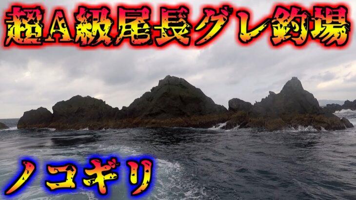 最強の尾長グレ釣り場で50アップ登場!?【中泊】