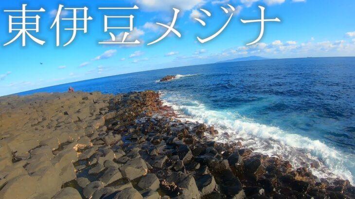 【東伊豆】富戸ツバ根で3連メジナ釣りしてみた!!!【フカセ釣り】