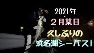 【浜名湖】冬のナイトシーバス。こんなに色々釣れる!?