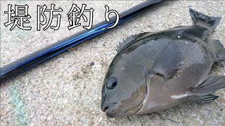 【グレ釣り】神戸のフカセ釣り!堤防のんびり釣行【堤防釣り・波止釣り】