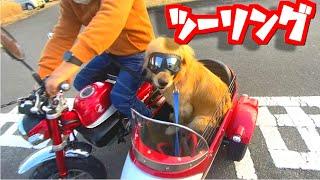 愛犬とツーリングに行ってきた!