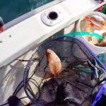 【船釣り】淡路沖でタイサビキ