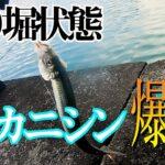 【海釣り】ニシン釣り🎣サビキの仕掛け落とすだけで初心者でも入れ食い状態