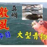 【海釣り情報  船釣り情報】激風な伊勢湾でもジグると・・!前半戦