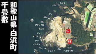 【和歌山県白浜町 人気!】『千畳敷 せんじょうじき』の海釣りガイド