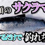 【サクラマス海釣り】初心者レベルでも〇〇手法で釣れちゃうルアーショアジギング!