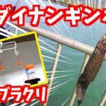 【釣り】vol.13~ダイナンギンポ&アジ&根魚~自作ブラクリ