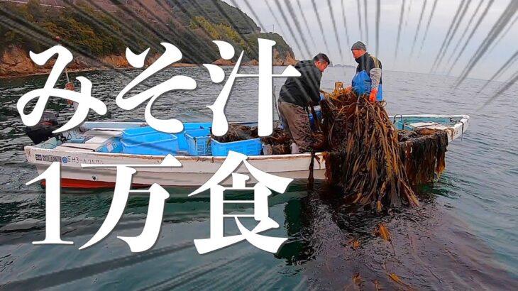 漁師の休日!漂流船で採れた【ワカメ】はみそ汁1万食分でした…