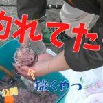 #179【フカセ】アタリないのに魚釣れる…