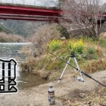 【大鯉釣りロマンを求めて】橋の下は2回目も釣れるのか!?