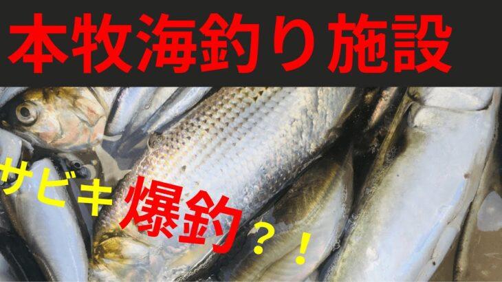 【本牧海釣り施設】サビキ爆釣!?人気の釣場を調査してきた!【2020.03.26】