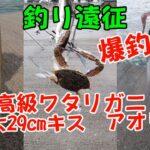 【釣り動画まとめ】超巨大29cmキス、高級ワタリガニ、アオリイカまで釣れちゃいました!