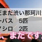 3/11日釣行茨城県那珂川河口 春は、まだですか?