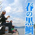 楽しいちぬ釣り 开心钓黑鲷 #40 春分の黒鯛かかり釣り 三重 矢口浦 Extreme Bream Fishing