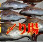 【海釣り情報  船釣り情報】デカい真鯛が釣れたら!〆り場第52弾