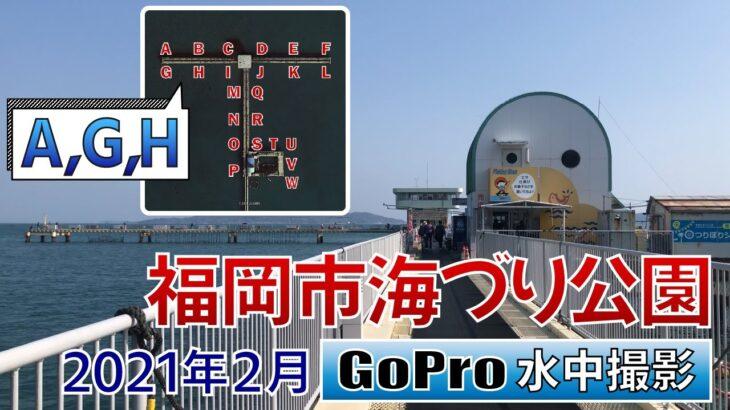 福岡市海づり公園でGoPro沈めてみた【ポイント A,G,H】