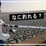 【干からびた海】こんな所で何が釣れるのか?Vlog・ビデオブログ