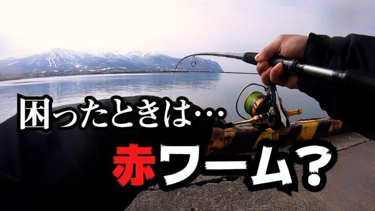 【海釣り】サクラマス、ホッケをワームでショアから狙う!赤ワームは感度良い?!