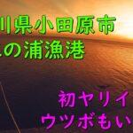 【江の浦漁港】湘南エリアで初めてのヤリイカ!ウツボもいるよ!【海釣り】