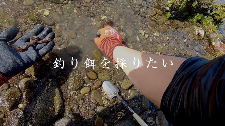 海釣りで使用する釣り餌を採る(ゴカイ・本虫など)【田舎の海遊び】