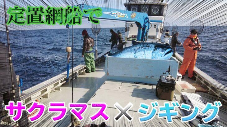 定置網船でサクラマスジギング釣り!むつ市 定置網漁