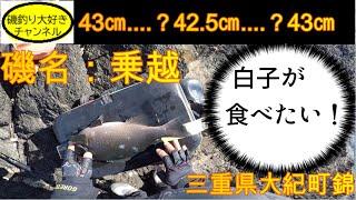 【磯釣り】【グレ釣り】【フカセ釣り】 三重県大紀町錦 乗越