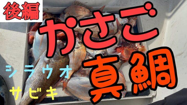 (後編)鯛サビキで真鯛がよく釣れました。