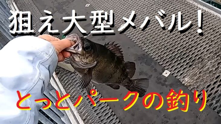 狙え大型メバル!海釣り公園とっとパークの釣り