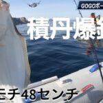 積丹の海に春魚到来!カレイ釣り絶好釣。