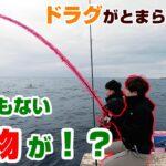 【カセ釣り】イカのブッコミ仕掛けにとんでもない大物が、、、!?