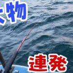 【船釣り】良型連発!?メバルの煮付けを食べたくて…