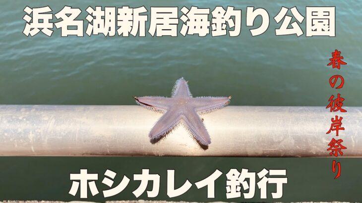 浜名湖新居海釣り公園 ホシカレイ釣行#浜名湖#海釣り