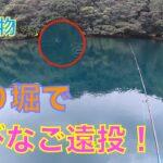 【海釣り】釣り堀でキャスティング⁉︎青物が追ってきて最後は水面爆発‼︎⁉︎