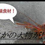 【海釣り】メバル釣りでまさかのあいつが釣れた…【大物】