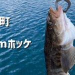 【2021年北海道江差釣り】ホッケ釣り
