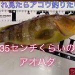 島根県浜田市 日本海釣り【初めての甘鯛狙い】最高でした!!2021年3月末(メインチャンネルも宜しくお願い致します)